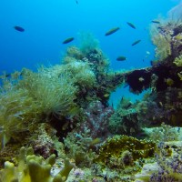 Talima Marine Sanctuary: A Seamless Blend of Nature and Humanity