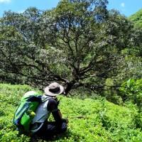 Cebu Highlands Trail Segment 4a: Ginatilan to Lawaan, Danao