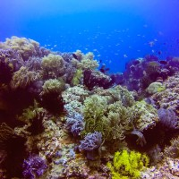 Black Forest: A Stunning Underwater Jewel in Camiguin